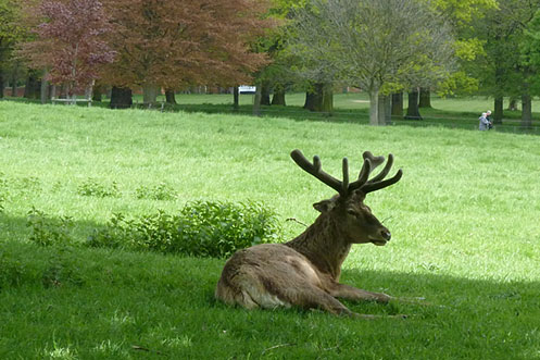Wollaton Hall Nottingham deer park