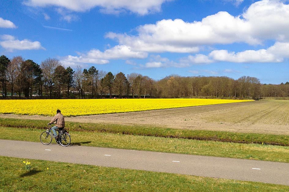 Cycling in Holland's tulip fields at Keukenhof